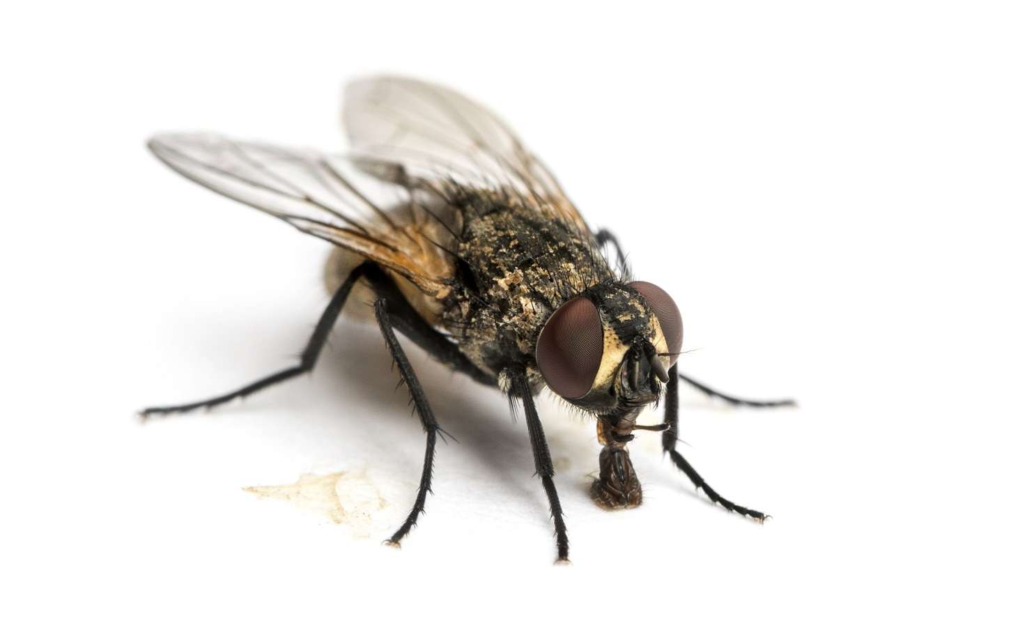 Comment faut-il se servir d'un anti-mouches?